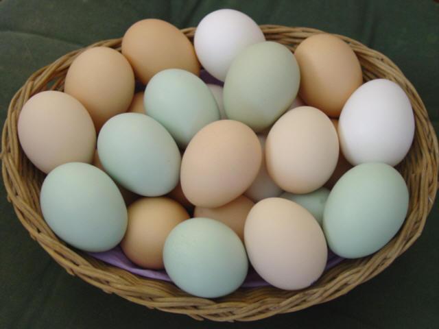 Makanan Pencegah Kanker Indung Telur